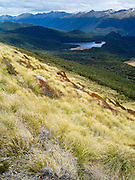 Low-angle view of the Mount Burns Tarns, Fiordland National Park, Southland, New Zealand
