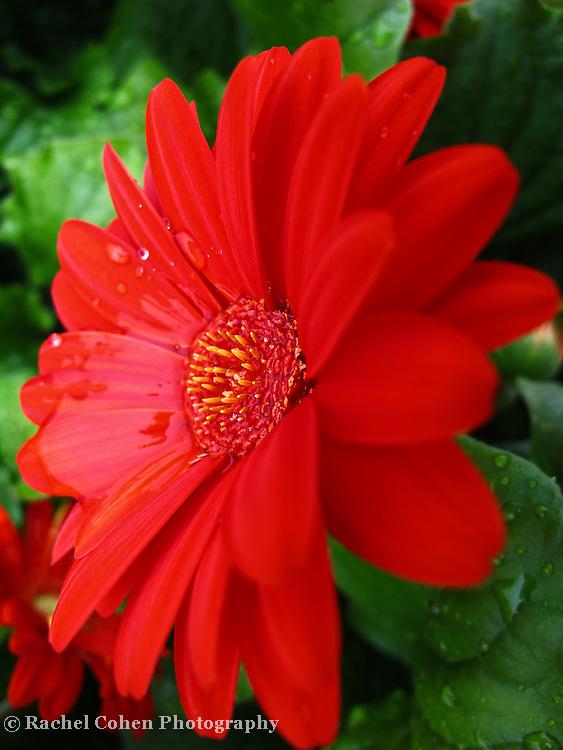 """Spring Shower""<br /> <br /> <br /> Flowers by Rachel Cohen"