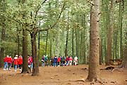 Atlas Cedar (Cedrus atlantica) forest in the Atlas Mountains, Morocco