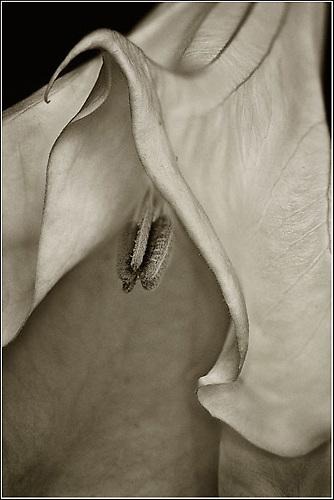 Flower Photographs by Kirk Decker