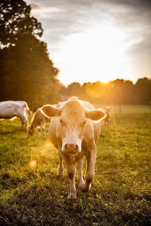 Virginia Living (Farming)<br /> Summer Smith