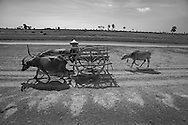 A traditional ox cart moves along an irrigation canal built by people in forced labor during the Khmer Rouge era.