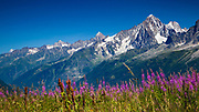 Summer blooms over Chamonix Valley 🇫🇷. Looking out from the Bellevue Plateau (1900m / 6233ft). Even if you are not on the alpine routes, there are several hundred kilometres of trails and hiking routes through glorious alpine meadows past waterfalls and glaciers ... plus the glorious clear mountain air makes it that much more enjoyable.