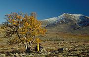 Climber, resting, sitting under tree, autumnal landscape, soft golden colours, blue sky, snowy peak mountain