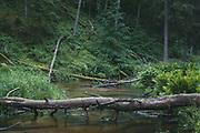 Fallen trees across the river Strīķupe | Vidzeme, Latvia