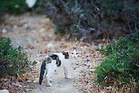 Grece, Crete, chat des rues. // Greece, Crete island, street cat