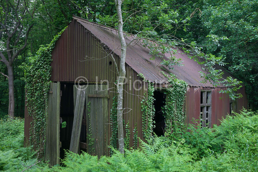An abandoned agricultural hut in woodland, on 10th June 2018, Denstroude, Kent, England.