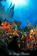 coral ledge encrusted with sponges<br /> Biscayne National Park, Florida (Atlantic)