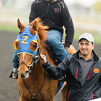 Thoroughbred Racing 2014 - Gallery 04