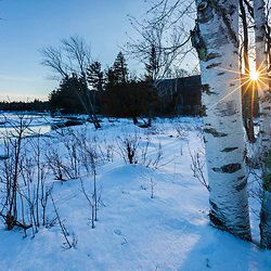 Paper birch trees (Betula papyrifera) stand near the banks of the East Branch of the Penobscot River in Maine's Katahdin Woods and Waters National Monument.