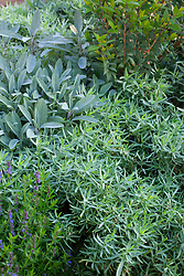 French tarragon, Salvia apiana (white sage), Myrtus (myrtle) and Hyssopus officinalis (hyssop)