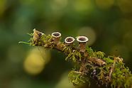 Unique & Unusual Mushrooms