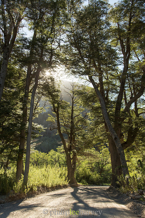 Sun behind trees on road, Patagonia, Argentina, South America