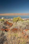 volcanic rock, grass and shrubs along the shoreline of Abert Lake, a large inland salt water (alkalai) lake in Southern Oregon.