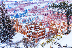 Twisted pines and frosty hoodoos, sentinels of time watching seasons come and go, winter and summer, decade after decade, one century after another defining their time like a fine wrinkled face that defines their  chiseled facade. Bryce Canyon National Park is such a festival of color and time is one of the finest examples of how snow, rain, and wind can sculpt our world.