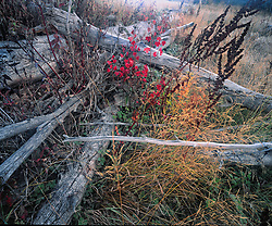 Close horizontal image of fallen trees and fall colored foliage and grasses with some mist in scene