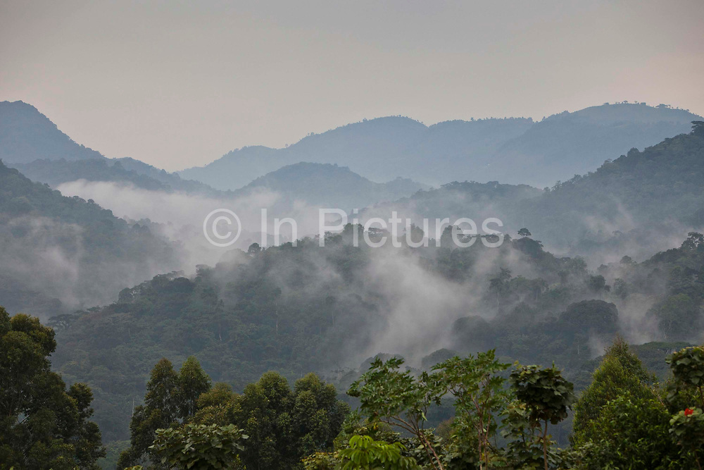 The morning valley mist across the Bwindi Impenetrable Forest National Park in South West Uganda. It 1 of only 2 natural habitats of the Mountain gorilla (Gorilla beringei beringei) in the world.