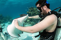 """Divers interact with Southern Stingrays at the famous dive site, """"Stingray City""""<br /> <br /> Shot in Cayman Islands"""