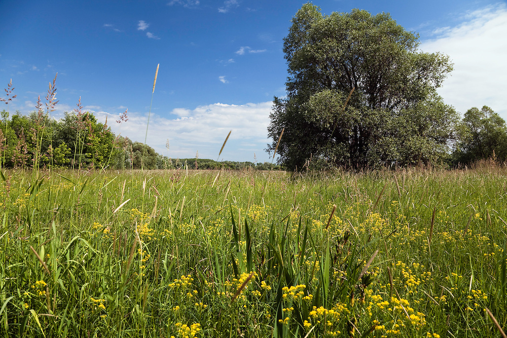 Regularly flooded meadows along Latorica River, Eastern Slovakia, Europe