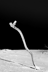 tree branch in the sand at White Sands, New Mexico