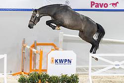 116, Never TR<br /> KWPN Hengstenkeuring 2021<br /> © Hippo Foto - Dirk Caremans<br />  02/02/2021