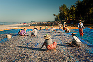 Myanmar, Ngapali. Group of women work segregating fish to be dried.<br /> Every single morning all the fisherman from the little village at Ngapali Beach come back home with their night catch. At the beach all the women wait for them and afterwards work with drying and selling fish and other creatures from the sea begins.
