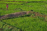 Agriculture<br /> Hauts plateaux<br /> Central Madagascar<br /> MADAGASCAR