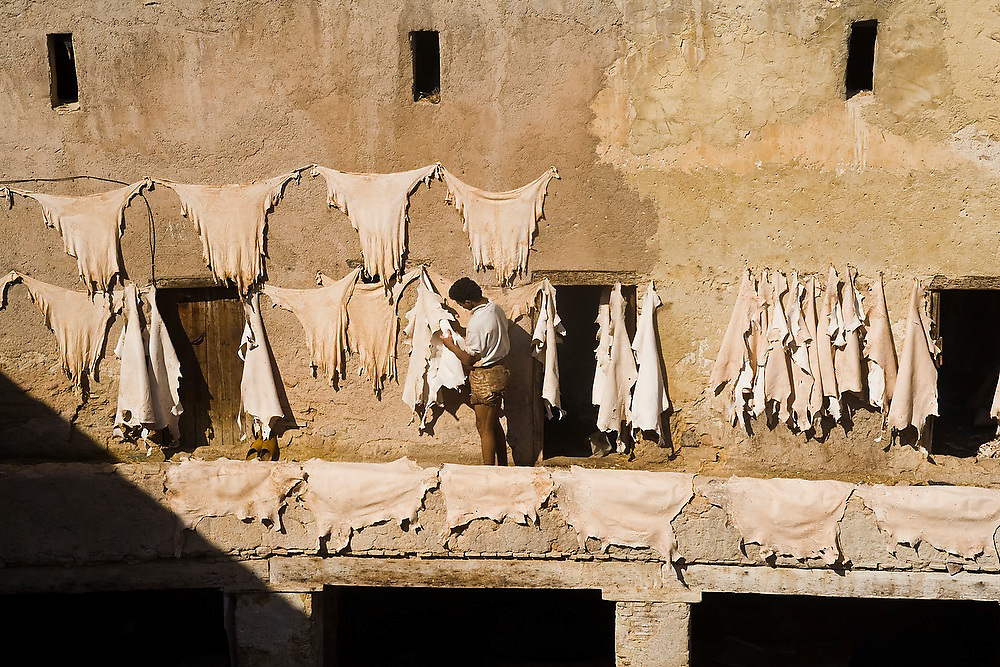 A man inspects the quality of the sheep leather skins hanging to dry on a wall in the Berber leather tannery in Fes El-Bali, Morocco.