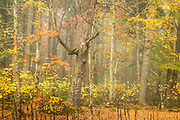 Fog and Autumn Forest