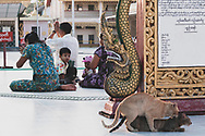 Yangon, Myanmar - October 22, 2011: At the Botataung Paya a Burmese family prays while, in the foreground, two cats mate. The paya is named after the 1000 military leaders who escorted relics of the Buddha from India to Myanmar more than 2000 years ago.