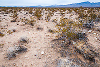 United States, California, The Mojave Desert receives less than 330 mm of rain a year.