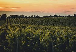 THEMENBILD - ein Weinanbau nach dem Sonnenuntergang in der Dämmerung, aufgenommen am 04. Juli 2020 in Novigrad, Kroatien // a vineyard after sunset at dusk, in Novigrad, Croatia on 2020/07/04. EXPA Pictures © 2020, PhotoCredit: EXPA/ Stefanie Oberhauser