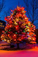 A Christmas tree at twilight, Littleton, Colorado USA