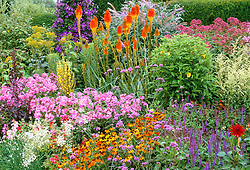 The end of long border at Great Dixter. Kniphofia uvaria 'Nobilis', phlox, verbascum, Verbena bonariensis, Clematis jackmanii 'Superba' and Helenium 'Moorheim Beauty'