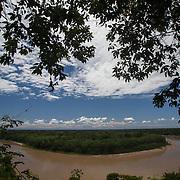 Rainforest Scenes