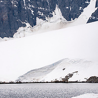 Crabeater seals cover a piece of ice in the harbor of Port Lockroy, Antarctica.