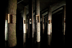 """© Licensed to London News Pictures. 14/10/2013. London, UK. An installation consisting of tree trunks with their bases submerged in water, making up """"Forest of Missing"""" (2013) by Know Hope, are seen at the press view for 'Brutal' at 180 the Strand in London today (14/10/2013). Located in the basement of an unused office building, sees dynamic installations, murals, film, animation, sound and dance explore the titular theme - Brutal.  Photo credit: Matt Cetti-Roberts/LNP"""