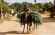 23 JULY 2002 - TRINIDAD, SANCTI SPIRITUS, CUBA: A man carries a load of fresh cut sugar cane on horseback in the Valle de los Ingenios (Valley of the Sugar Mills) near the colonial city of Trinidad, province of Sancti Spiritus, Cuba, July 23, 2002. Trinidad is one of the oldest cities in Cuba and was founded in 1514. Valle de los Ingenios was the heart of Cuba's early sugar industry and is still a leading producer of sugar, one of Cuba's most important cash crops..PHOTO BY JACK KURTZ