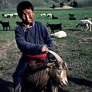 Mongolia. sheep breeders  Ik Uul Sum      / Enfant sur une chèvre. (à  Ik Uul Sum  Mongolie)Le troupeau vient d'être libéré après la traite du soir. Mais un enfant continue à s'amuser avec une chèvre qu'il a réussi à maîtriser et ne veut plus relâcher. (Sum de IK UUL dans l'aymag de ZAVQAN,).   116     k  /  P0000754