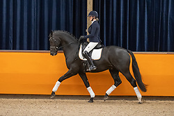 Galiart Jesslin, NED, More Legends<br /> Fotodag KWPN Hengstenkeuring 2021<br /> © Hippo Foto - Dirk Caremans<br /> 09/01/2021