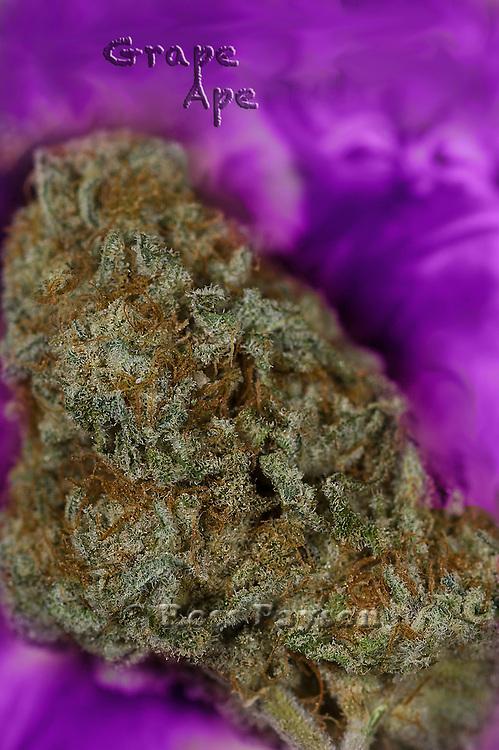 Fine art cannabis marijuana photos