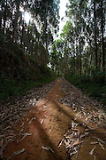Conceicao do Castelo_ES, Brasil...Trecho da rota Imperial em Conceicao do Castelo...Imperial Route in Conceicao do Castelo...Foto: LEO DRUMOND / NITRO