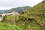 vineyard hermitage rhone france