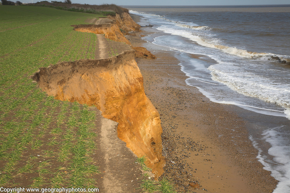 Footpath cut by recent erosion of cliffsin Benacre National Nature Reserve, Suffolk coast, England