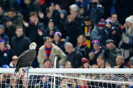 Kayla the Eagle before The FA Cup 3rd round match between Crystal Palace and Grimsby Town FC at Selhurst Park, London, England on 5 January 2019.