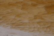 Sao Goncalo do Rio Preto_MG, Brasil...Parque Estadual do Rio Preto, em Sao Goncalo do Rio Preto, Minas Gerais. Detalhe de uma planta no riacho...The Rio Preto State Park, in Sao Goncalo do Rio Preto, Minas Gerais. In this photo the plant in the watter...Foto: LEO DRUMOND / NITRO.