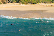Monk Seal, Laau point, Molokai, Hawaii