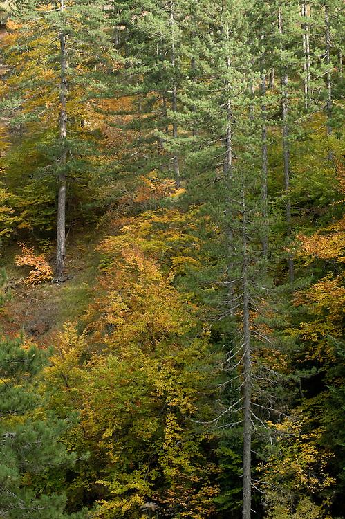 Greece, Pindos Mountains, Pindos NP, Valia Calda, Mixed forest area