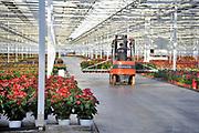 Nederland, Huissen, 10-12-2019 Een hypermoderne kas in het kassen gebied Bergerden. Hier worden alleen Anthuriums gekweekt. De kassen worden verwarmd met aardwarmte, warmtewisselaar,warmtepomp . Foto: Flip Franssen