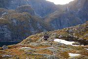 The Norwegian Trekking Association's Munkebu Hut on Moskenesoya, Lofoten Islands, Norway.